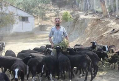 Bu Koyunu Almak İsteyenler 5 Ay Sıra Bekliyor