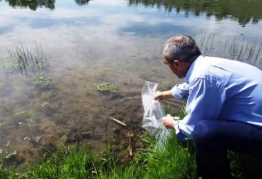 Samsun'un Göl ve Göletlerine 110 Bin Sazan Yavrusu Bırakıldı