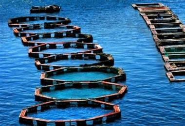 Su Ürünleri Kanunu'nda Değişiklik Teklifi Komisyonda
