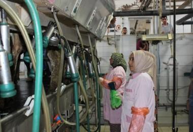 İşkur, Suriyelilere Süt Sığırı Yetiştiriciliğini Öğretiyor