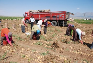 Zeybekci: Soğan Ve Patates İthalatına Müsaade Edeceğiz