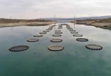 Baraj Ve Göletlerdeki Balıkçılığın Ekonomik Değeri Yıllık Olarak Yaklaşık 940 Milyon TL