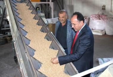 Yerli Tohum Firmasından Yerli Tohum İhracatı Başarısı