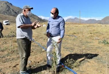 Bayburt'ta İlk Defa Tesis Edilen Goji Berry Üreticilere Alternatif Kazanç Sağlayacak
