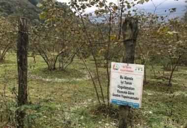 Giresun'da ÇATAK Projesi İle 140 Üretici Desteklendi