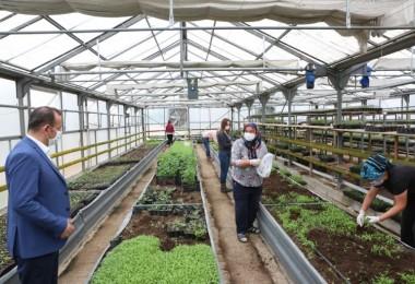 Don Olayından Zarar Gören Çiftçilere Ücretsiz Fide Desteği