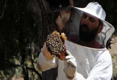 Ağaç kovuklarında buldukları balın kilosunu 500 liradan satıyorlar