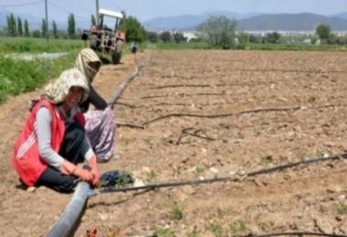 İzmir'de çiftçilere büyük müjde!
