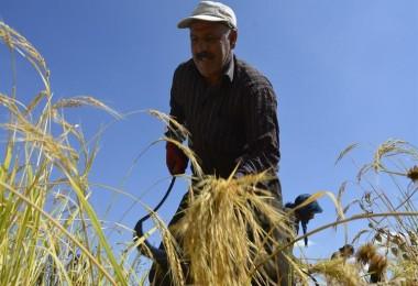 Çiftçinin Takibe Düşen Borcu İki Katına Çıktı