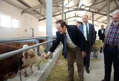 """Vali Pehlivan: """"Hayvancılık Projelerini Çok Önemsiyoruz"""""""