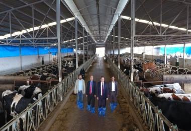 Süt İşletmesi Organik Gübre İle Yemini Üretiyor