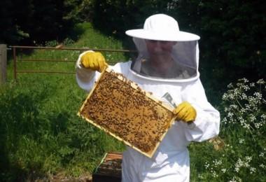 Arıcılara Desteklemeleri Ödeniyor