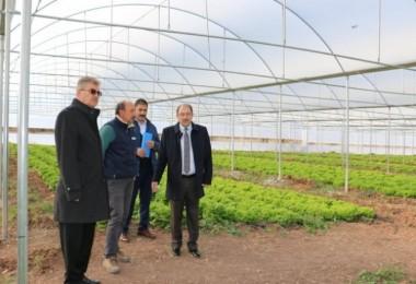 Erzincan'da Sera Yatırımları Devam Ediyor