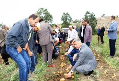 Havza'da Patates Hasadı Tarla Günü Yapıldı