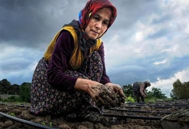Bayraktar: Tarımın yükü kadınların sırtında