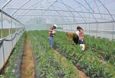Tarımsal İşletmelere 600 TL Katılım Desteği