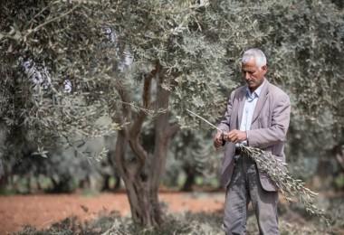 FAO tarafından Suriyeli sığınmacılara tarımsal eğitim desteği