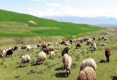 263 bin 700 hektar mera kiraya verildi