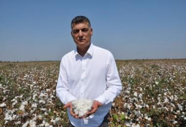 Beyaz altında buruk hasat