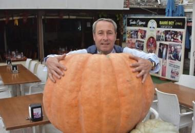 160 Kiloluk Bal Kabağı Görenleri Şaşırtıyor