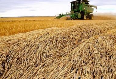 Gaytancıoğlu: İktidarın Buğdayda Uyguladığı Politika İflas Etmiştir
