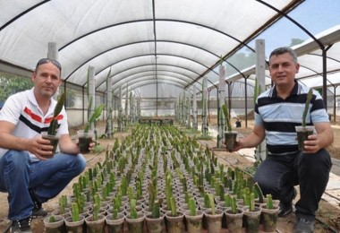 Tayland'da tattığı 'ejder meyvesi'ni Aydın'da üretiyor