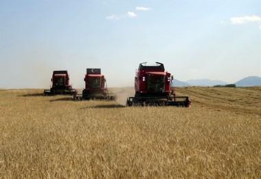 En Yüksek Yeterlilik Derecesi %111,7 İle Buğdayda Gerçekleşti