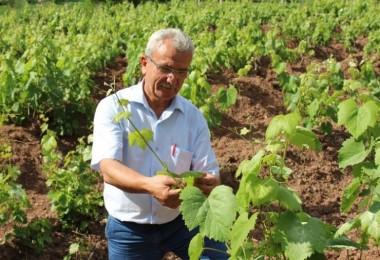Meyvesi 2 Liradan, Yaprağı 20 Liradan Satılıyor