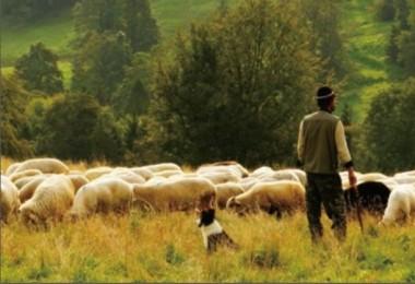 150 Bin Çoban Açığını Afganlar Kapatacak
