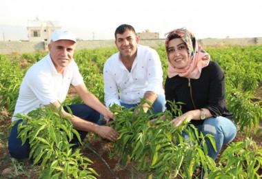 Tarım Danışmanları Zoru Başardı