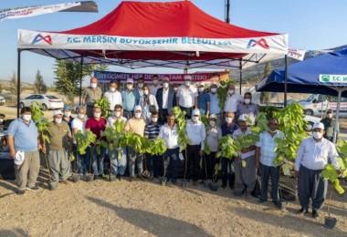 Başkan Seçer, üreticilere 12 bin 500 incir fidanı dağıttı