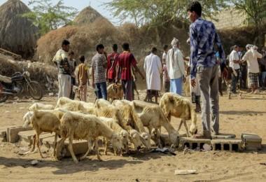 Birleşmiş Milletler Gıda Örgütü; 55 Ülkede Gıda Krizi Yaşanıyor