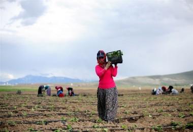 Tarımda İstihdam İşsizliği 1,8 Puan Düşürdü