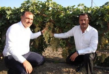 Vali Kaldırım: Elazığımız, Türkiye üzüm üretiminin yüzde beşini karşılıyor