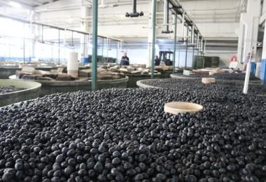 Marmarabirlik'ten 110 Milyon TL'lik Ödeme