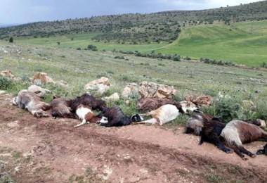 Yıldırım Düşmesi Sonucu Çoban Yaralandı, Keçiler Telef Oldu