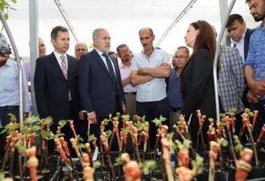 Yozgat Çiftçisine Tüplü Asma Fidan Dağıtıldı
