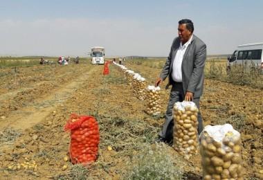 Gürer: Patateste Üreten Mağdur, Tüketen Mağdur