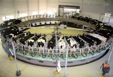 En Düşük Süt Fiyatı 2 Lira 6 Kuruş Olmalı