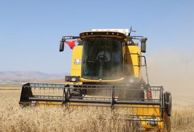 Elazığ'da Yaklaşık 1 Milyon Dekar Buğday ve Arpa Ekimi Gerçekleşti
