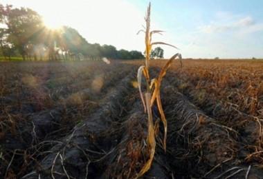 Çiftçinin Hevesi Kursağında Kaldı: 3 Milyar Euro Kayba 340 Milyon Destek!
