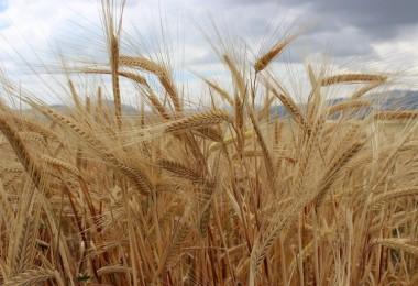 Tarım Kredi'den Yem Fiyatlarını Düşürecek Alım Açıklaması