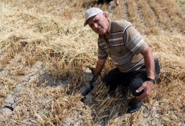 Değişen İklim Şartları Buğdayı Vurdu