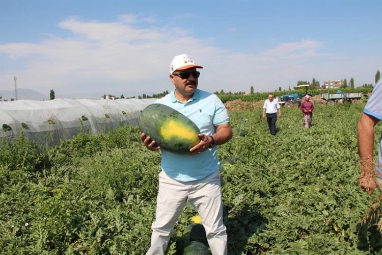 Iğdır'da yerli kavun ve karpuz hasadı başladı
