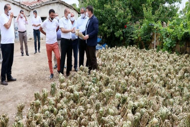 Rusya'nın korona ve antibiyotik sarımsağı Aksaray'dan