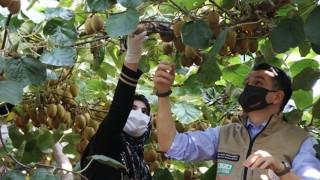 Bakan Pakdemirli Yalova'daki Kivi Hasadını Başlattı