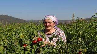 Beykoz'da Kent Tarımı Kadın Çiftçilerle Kalkınıyor