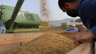 Bolu'da Soya Üreticiye Umut, Endüstriye Işık Oluyor