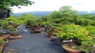 Bonsai Müzesi Yalova'yı Dünyaya Tanıtabilir