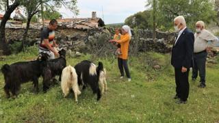 Büyükşehir'den Yetiştiriclere 300 Kıl Keçisi desteği